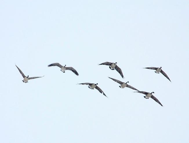 flighty_f
